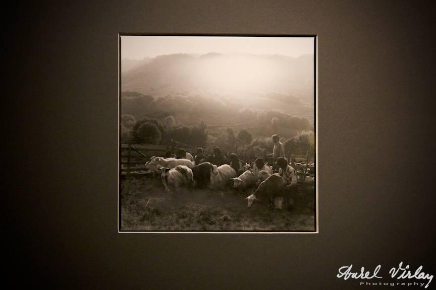 Fotografia mea favorita din expozitia foto Radu Grindei
