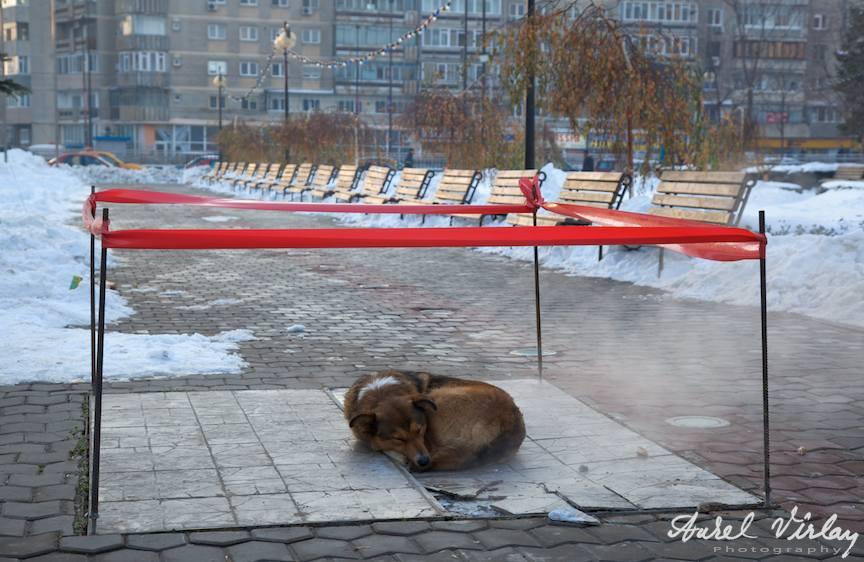 caine-bucuresti-fotografie-de-iarna