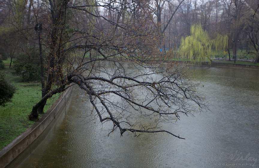 Ploaie-lacul-cismigiu