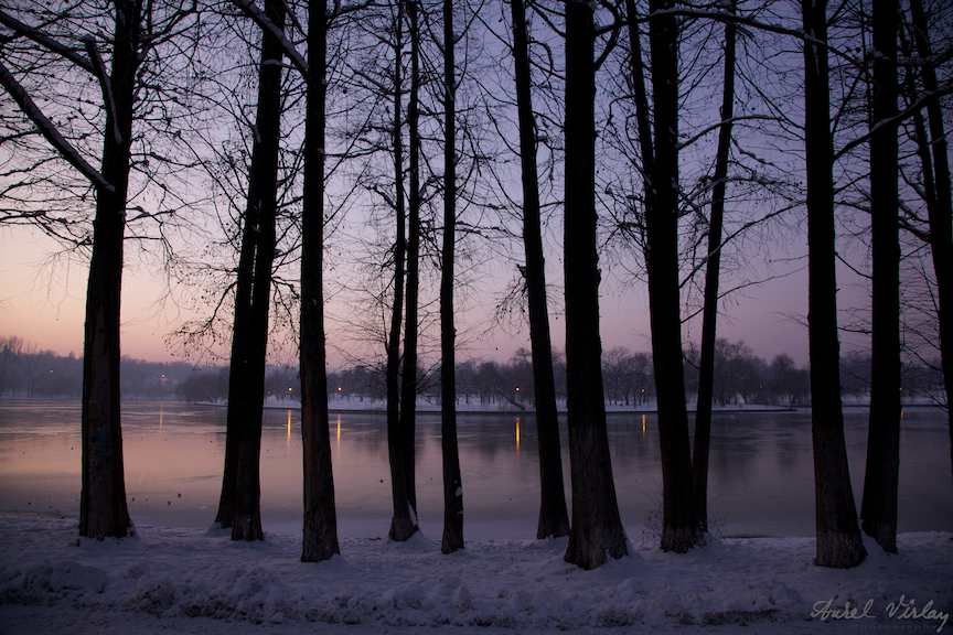 inserare-perdeaua-copacilor-desfrunziti