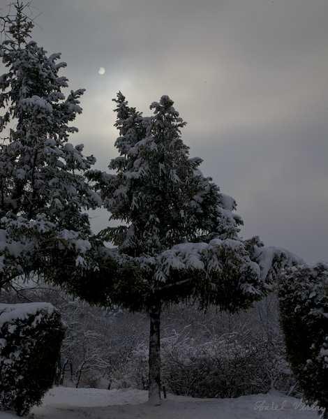 peisaj-iarna-eclipsa-soare