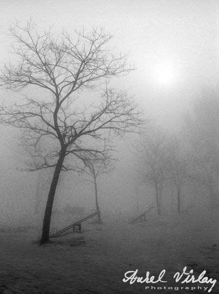 copaci-ceata-balansoar-griuri-fotografice