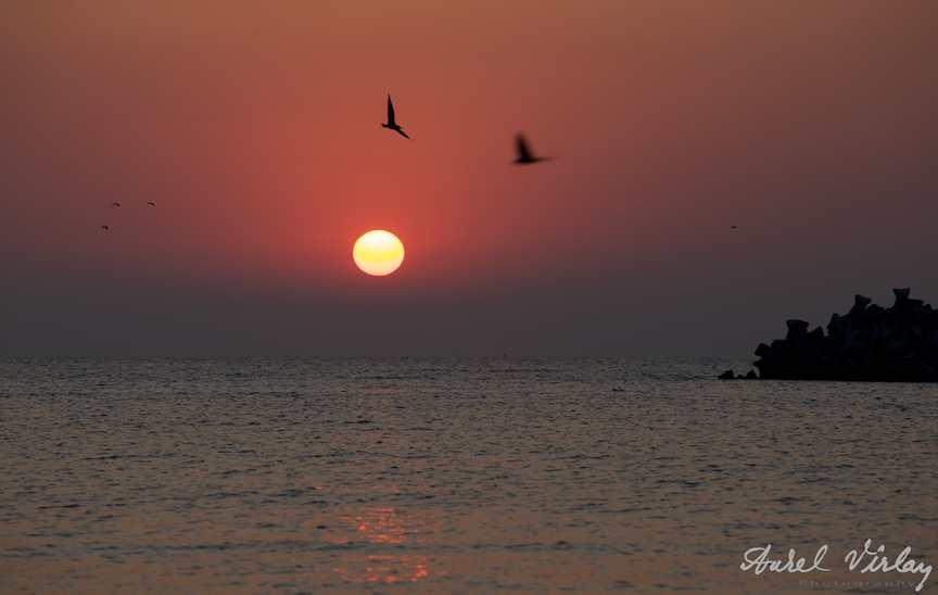 impresie-rasarit-soare-pescarusi
