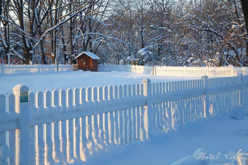Peisaje-iarna-zapada-Herastrau-FotoAV1