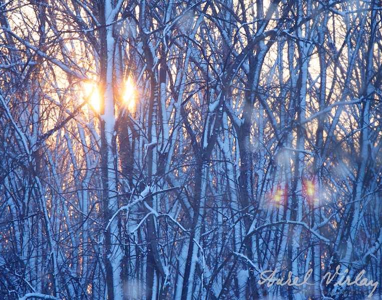 Imagine emblematica apus soare iarna padure copaci inzapeziti