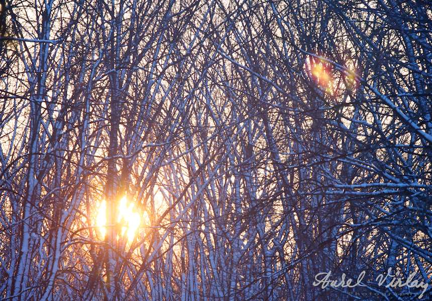 Peisaje-iarna-zapada-Herastrau-FotoAV11