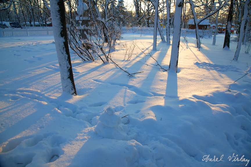 Peisaje iarna copaci zapada soare contre-jour fotografic