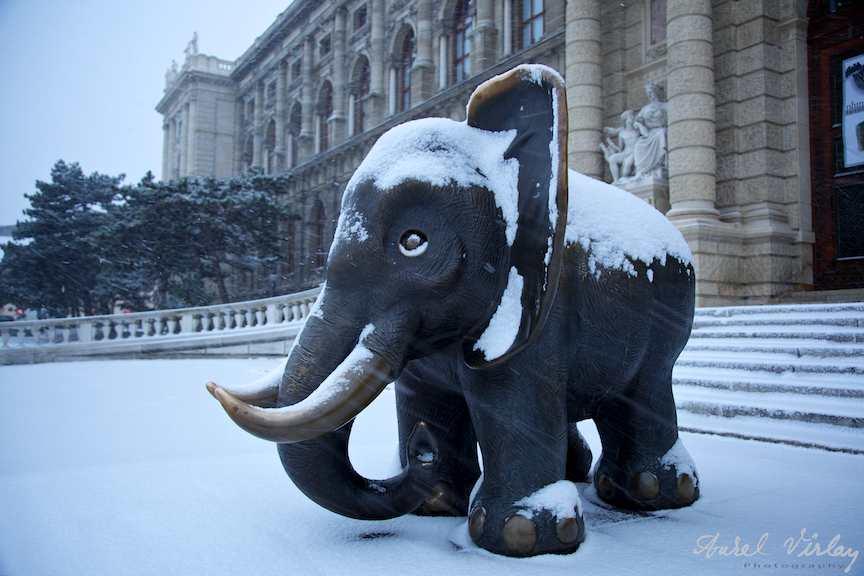 Elefant nins la intrarea Muzeului Natural de Istorie Viena.