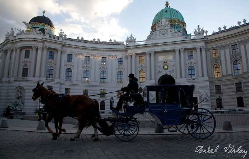 Caleasca cai plimbari turistice Viena