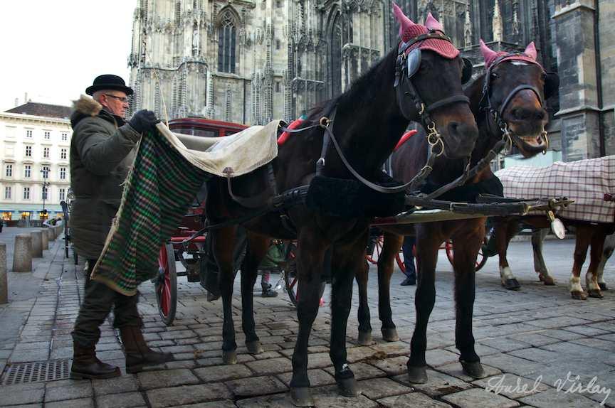 Vizitiul pregatind trasura pentru plimbarea turistilor din Viena