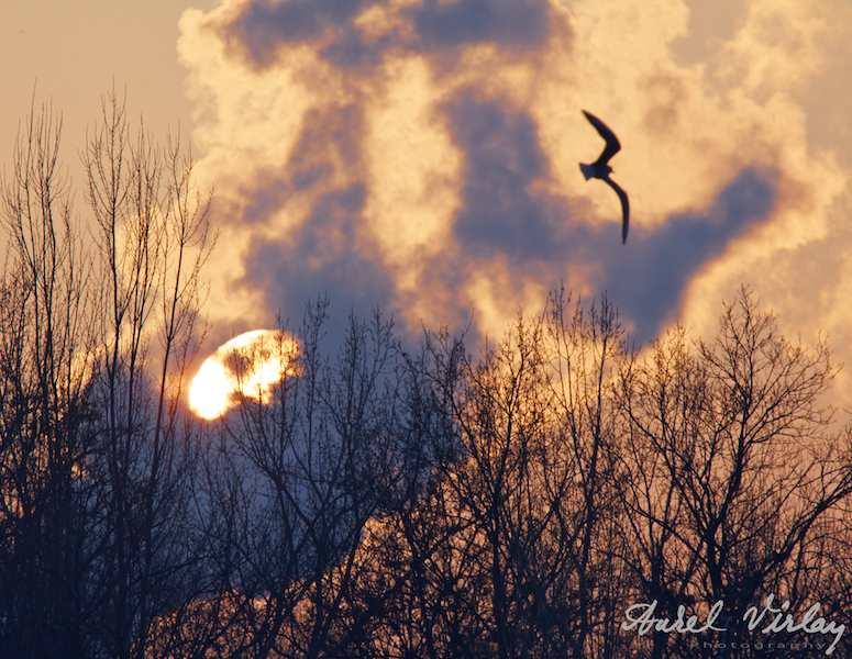 soarele-in-asfintit-pescarus
