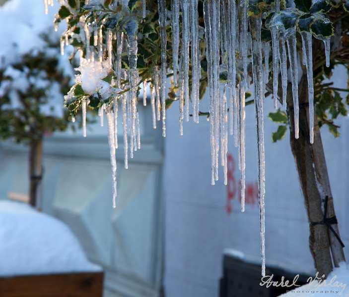 Turturi de gheata in apusul soarelui rece de iarna.