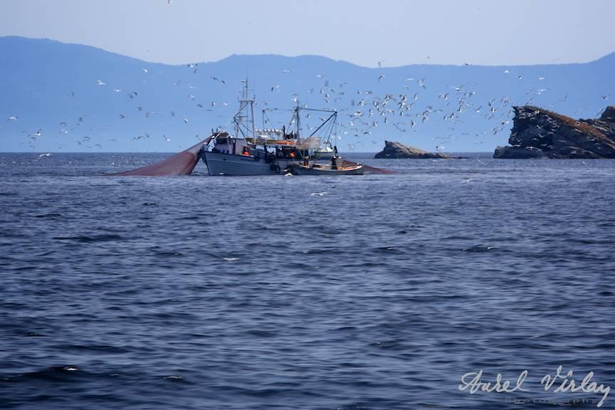 Fotografii-vase-pescuit-pescarusi-Grecia-Marea-Egee