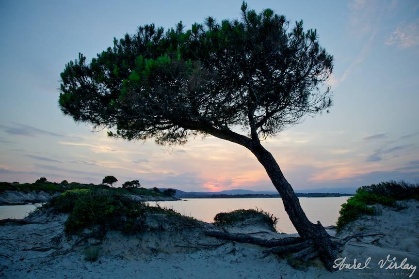 Fotografii-vacanta-Grecia-Halkidiki-Sithonia-pin-singuratic
