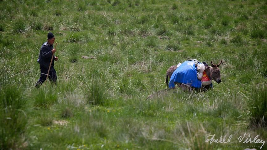 Peisaj cu magar si cioban. Fotografia *Imaginea Poverii* mai mult decat o mie de cuvinte.