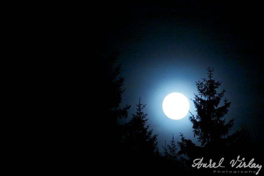 Fotografie nocturna cu Luna plina ascunsa de brazi.