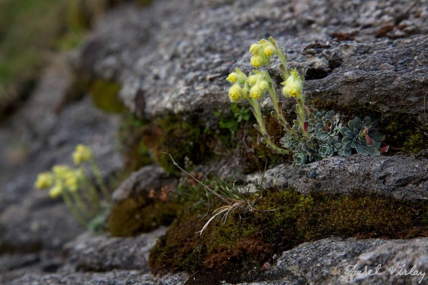Armonie galbena in stanca muntilor Bucegi. Landscape-Photography-AurelVirlan.