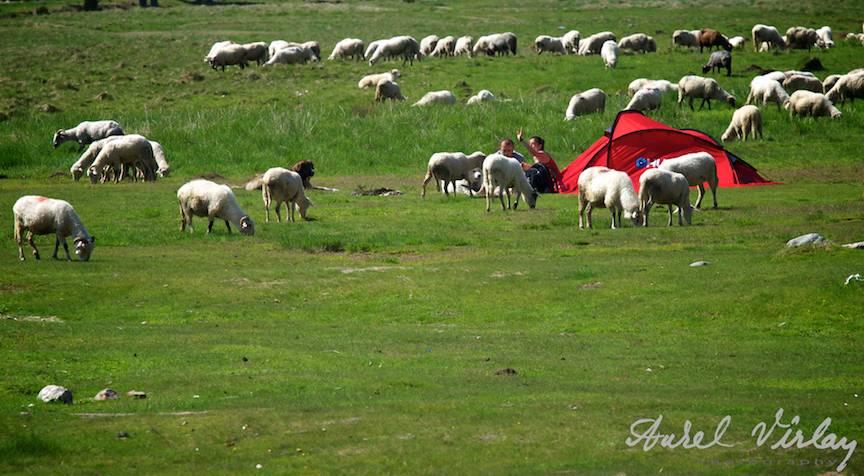 Oile, cainii ciobanesti si turistii entuziasti iubitori de mic dejun in aer curat.