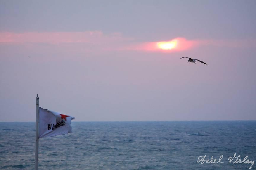El-Comandante-Black-Sea-Beach-Pub-Flag-Seagull