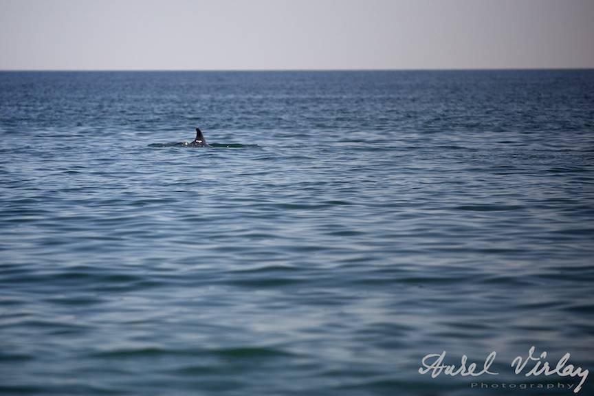Aripioara-Delfinului-Black-Sea-VamaVeche-Marea-Neagra
