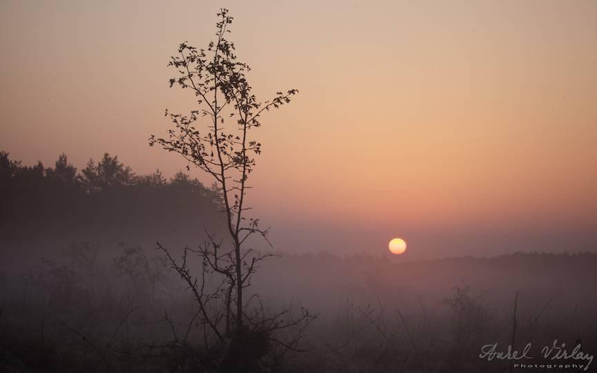 Ramura-scaieti-rasarit-soare-ceata-fotografie-peisaj-AurelVirlan-photography-12