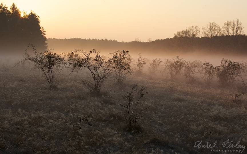 Rasaritul-soarelui-ceata-fotografia-peisaj-rural-AurelVirlan-photography-22