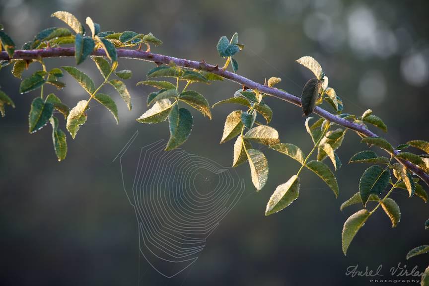 Detaliu-foto-peisaje-AurelVirlan-photography-34