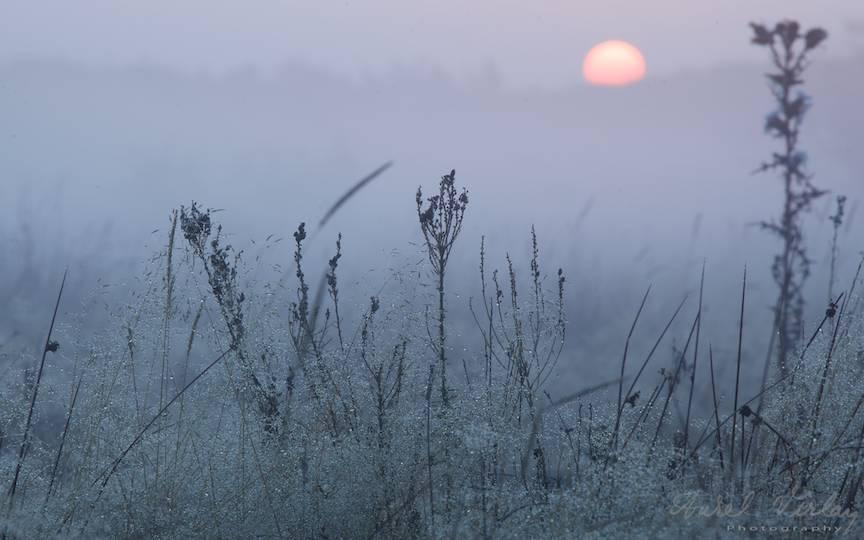 Dimineata-rasarit-soare-ceata-fotografie-peisaj-AurelVirlan-photography-6
