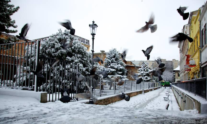 _Iarna-Bucuresti-FotoAurelVirlan-6-pasarile-peisaje-citadine