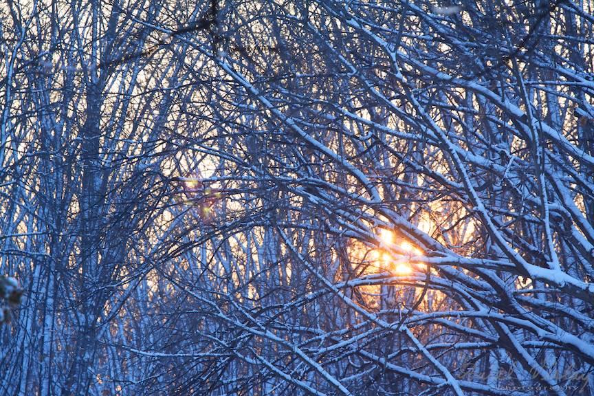 Apus de soare printre copacii goi de pe marginea lacului Herastrau lângă Podul Băneasa.