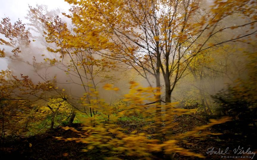 Frunzele-ruginii-padure-toamna_Travel-photography-Aurel-Virlan-peisaje-