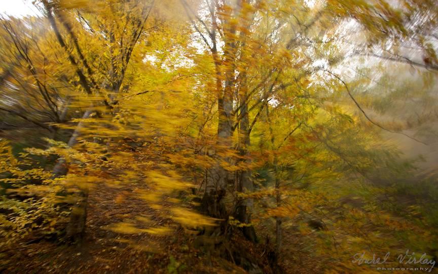 Cromatica-frunzelor-padurii_Travel-photography-Aurel-Virlan-peisaje-foto-