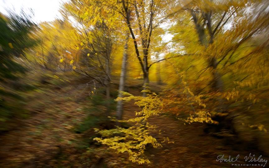 Copacii-padurii-fotografii-frunze-galbene-uscate_Travel-photography-Aurel-Virlan-peisaje