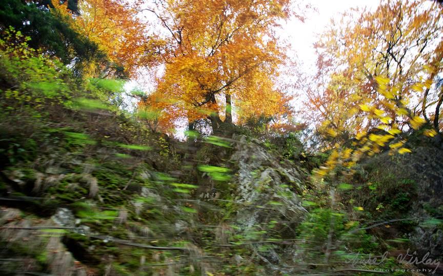 Muntii-Maramuresului-Valea-Vaser-Mocanita_Travel-photography-Aurel-Virlan-peisaje-foto-miscarea-trenului