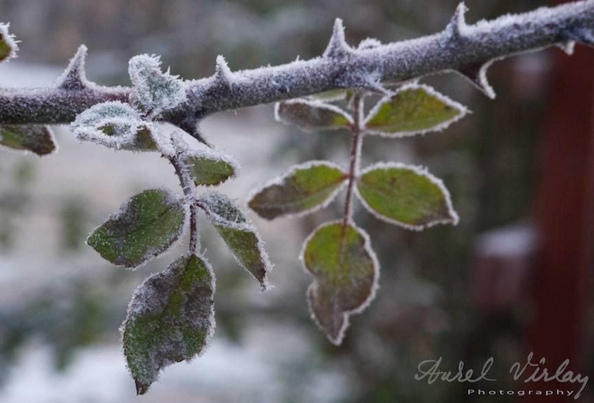 Foto-jurnale-iarna-Bucuresti Promoroaca-cristale-ger  11