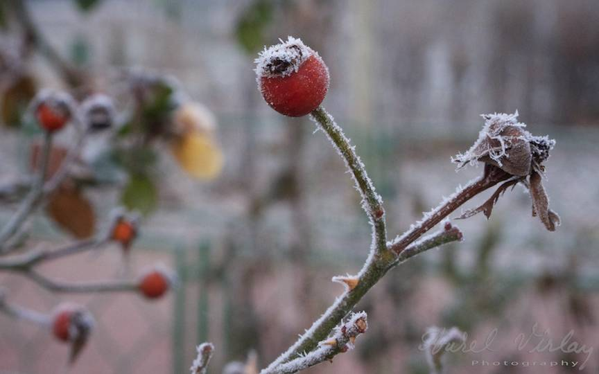 peisaje hibernale _Fotografii-iarna-Bucuresti Promoroaca-cristale-ger  3