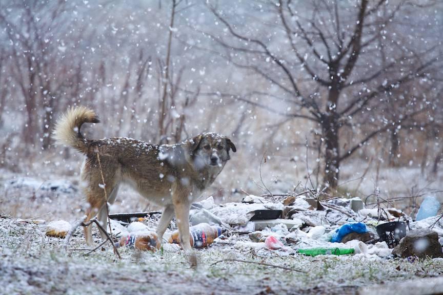 Zapada-mieilor fotografii caine vagabond Bucuresti-iarna 5