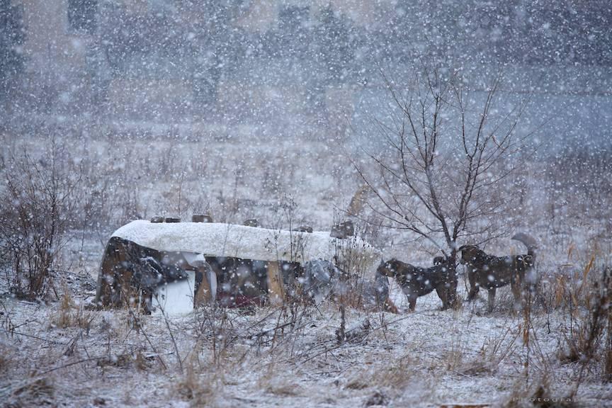 Zapada-mieilor peisaje foto Bucuresti-iarna