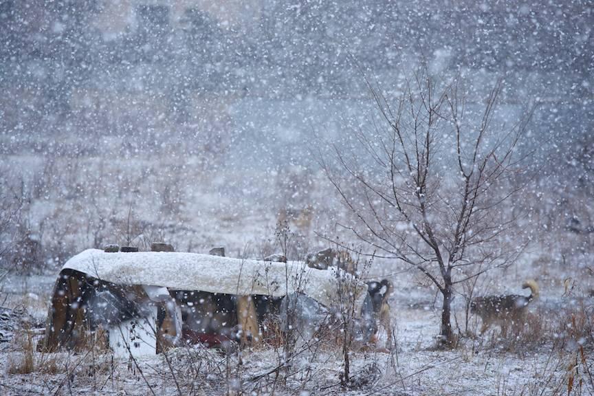 Fotoreportaje strada Bucuresti-iarna caini zapada mieilor