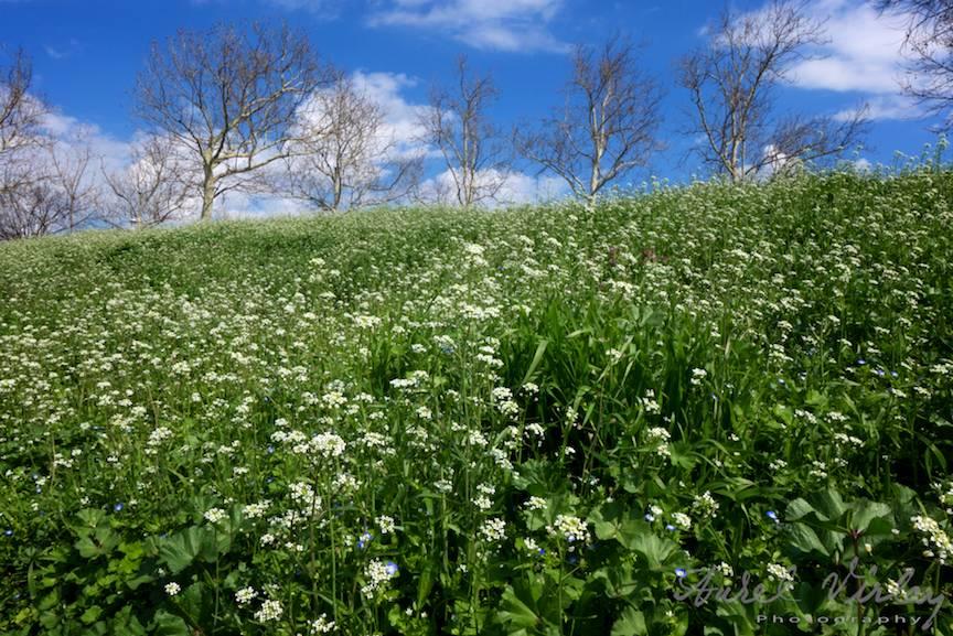 Fotografia peisaj deal cu flori copaci flori de camp.