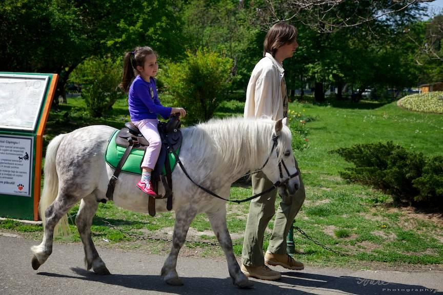 Fotografii-Cismigiu-Traditii-Flori-Sarbatori Plimbari ponei