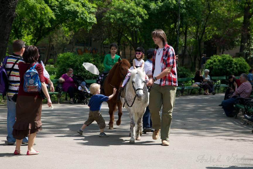 Instanteu Foto copii plimbari ponei parcul Cismigiu Bucuresti