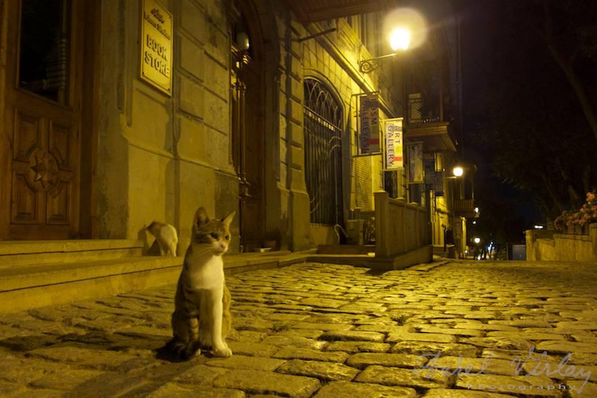 Miau! Portretul foto al unei pisici noctambule.