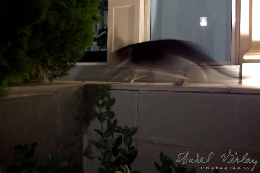 Fotoreportaj nocturn cu pisici fugare in Baku!