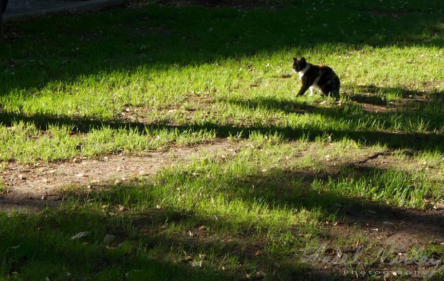 Peisaj fotografic cu o pisica incalzindu-se la soare.