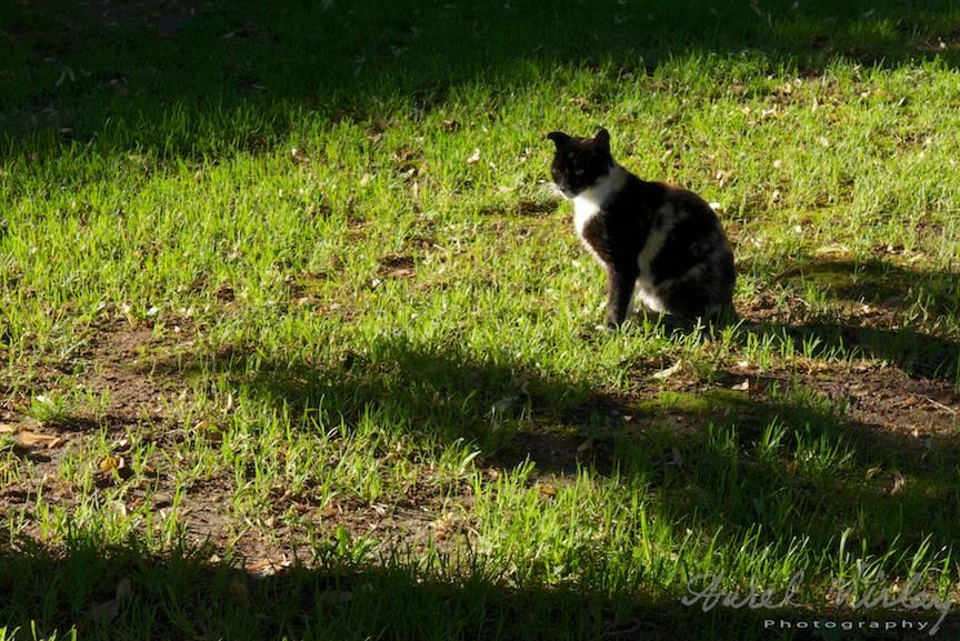 Pisica iarba verde incalzindu-se la Soare FotoAV- 4