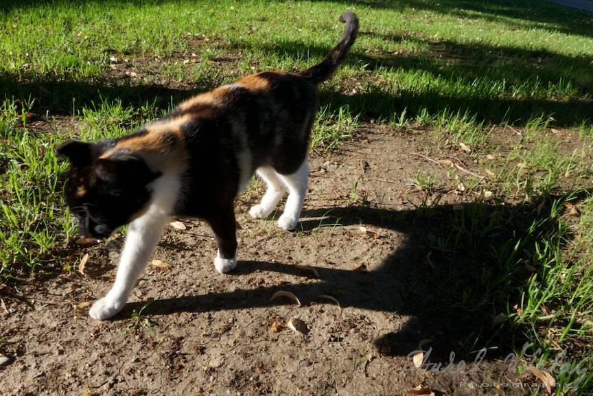 Umbra fotografica purtata a pisicii din mahalaua mea.