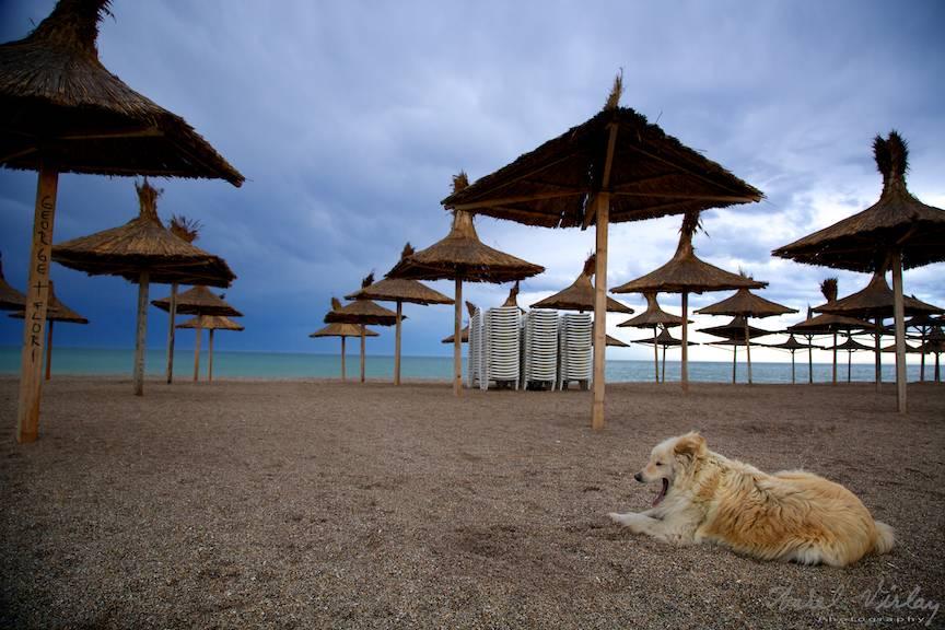 Umbrelele Stuf caine cascand pe plaja nisip Vama Veche