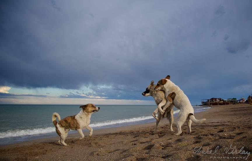 Vama Veche Fotografii cer norii albastri joaca cainilor