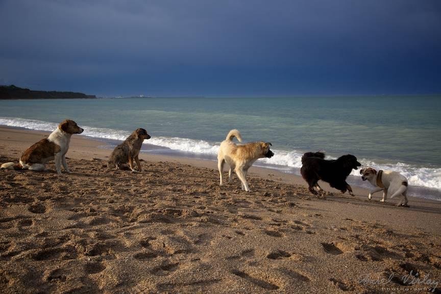 Vama Veche Fotografii cer nori albastri cainii plajei